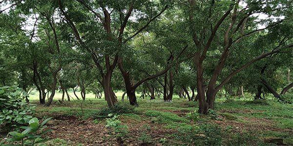 Vihar lake forest