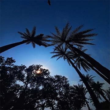 tree-sun-and sky
